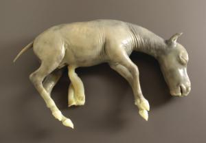 Ward's® Preserved Horse Fetus
