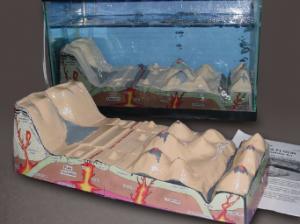 Sea Floor Simulator
