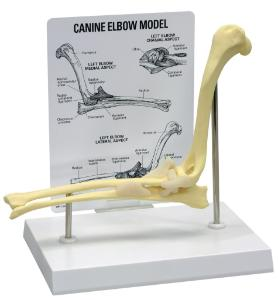 GPI Anatomicals® Canine Elbow