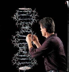 Minit® Minit DNA Model