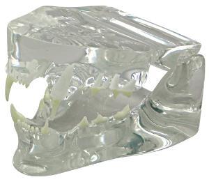GPI Anatomicals® Clear Feline Jaw