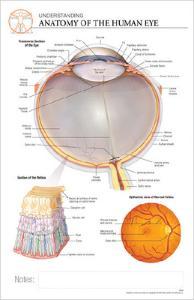 Post-It® Anatomical Charts