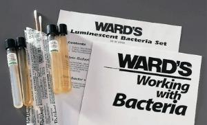 Ward's® Luminescent Bacteria Set