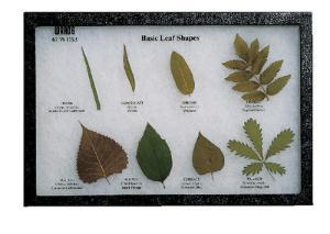 Basic Leaf Shapes Riker Mount