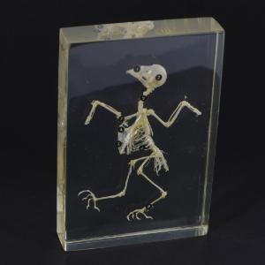 Bird skeleton plastomount