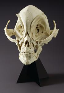 BoneClones® Alien Skull