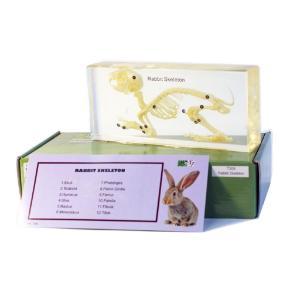 Rabbit skeleton plastomount, packed