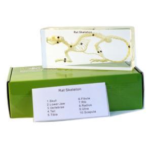 Rat skeleton plastomount, packed