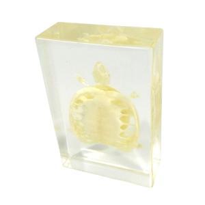 Turtle skeleton plastomount