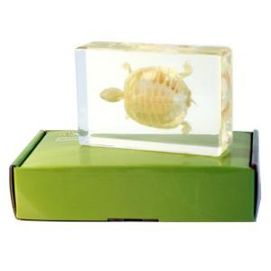 Turtle skeleton plastomount, packed