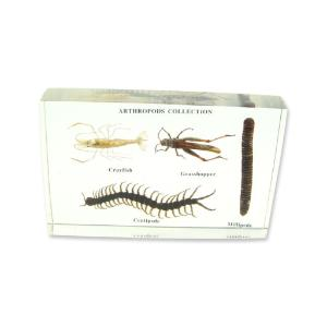 Arthropods collection plastomount