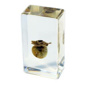 Snail plastomount