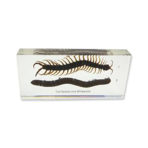 Centipede and millipede comp plastomount