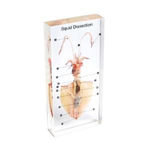 Squid dissection plastomount