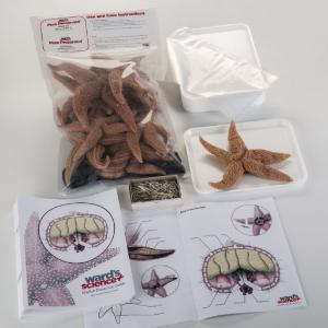 Ward's® Pure Preserved™ Starfish Dissection Kit