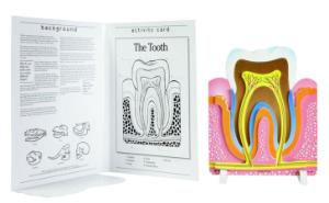 Book Plus: Anatomy