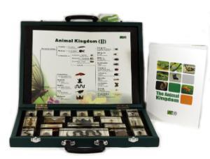 Plastomount set - animal kingdom II