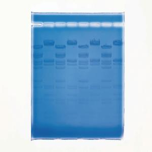 Ward's® QUIKView DNA Stain for Gel Electrophoresis