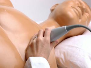 Transesophageal echo and transthoracic echo training ultrasound training model