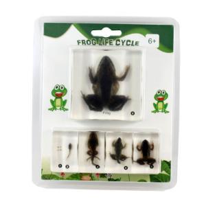 Frog life cycle plastomounts set of 5