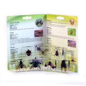 Insect plastomount collection set of 7