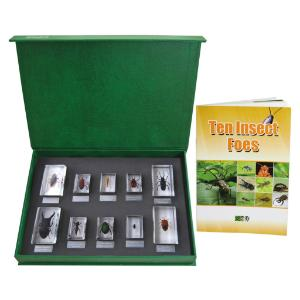 Insect foes collection set of 10