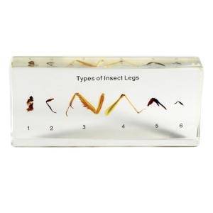 Types of insect legs plastomount