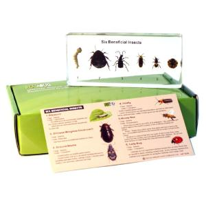 Beneficial insects plastomount