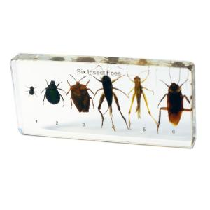 Insect foes plastomount