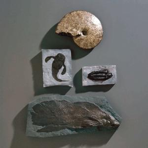 <i>Eurypterus remipes</i>
