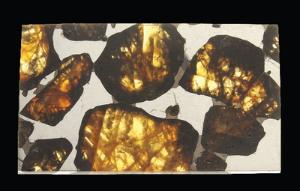 Pallasite (Polished)
