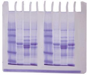 EDVOTEK Diversity of Fish Proteins
