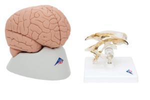 Brain bundle
