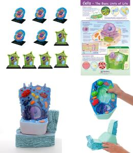 Cell models classroom bundle