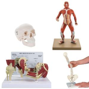 Mini anatomy set