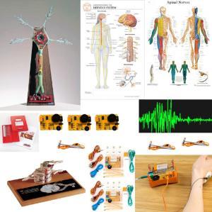 Nervous system bundle