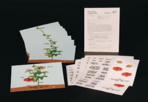 Parts of a Plant Cling Manipulatives