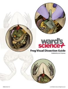 Frog Visual Dissection Guide