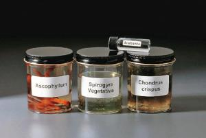 Ward's® Algae Types Collection