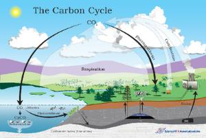 Carbon Cycle Poster Boreal Science
