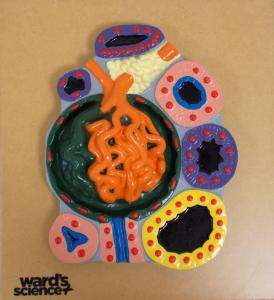 Ward's® Glomerulus and Sections of Tubules Model