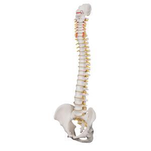 Lifetime Flexible Spine