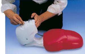 Basic Buddy® Budget CPR Torsos