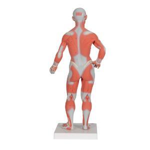 Model Mini Muscular Figure