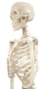 Walter® Rod Mount Skeleton