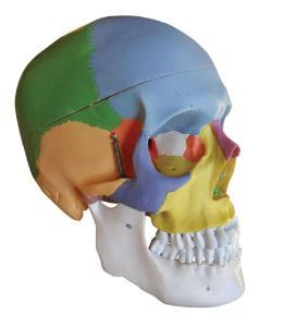 Walter® 22 Colored Classic Skull