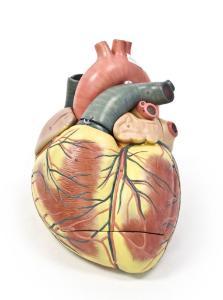Walter® 3 Part Jumbo Heart