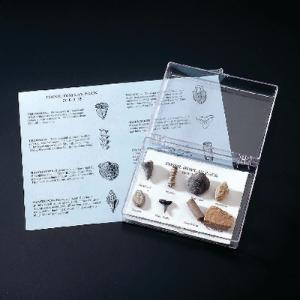 Ward's® Fossil Display Pack