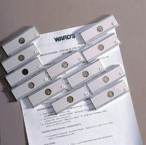 Ward's® Microfossil Strew Slide Set