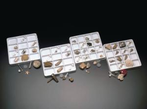 Cnidaria (Corals) Collection
